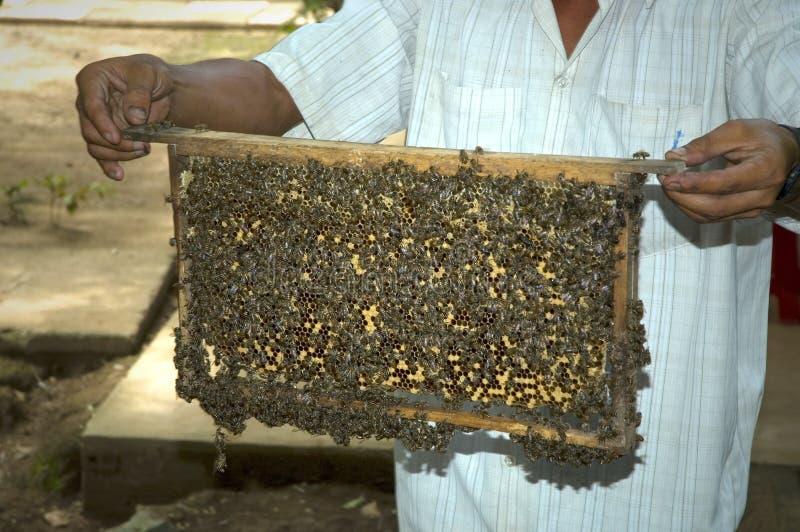 συγκομίζοντας μέλι στοκ εικόνες