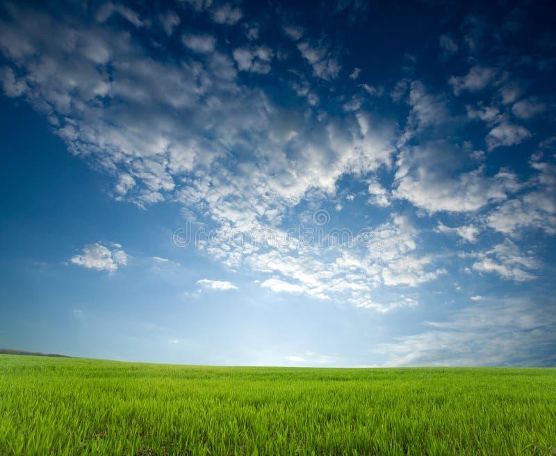 συγκομιδές πράσινες πέρα & στοκ εικόνες