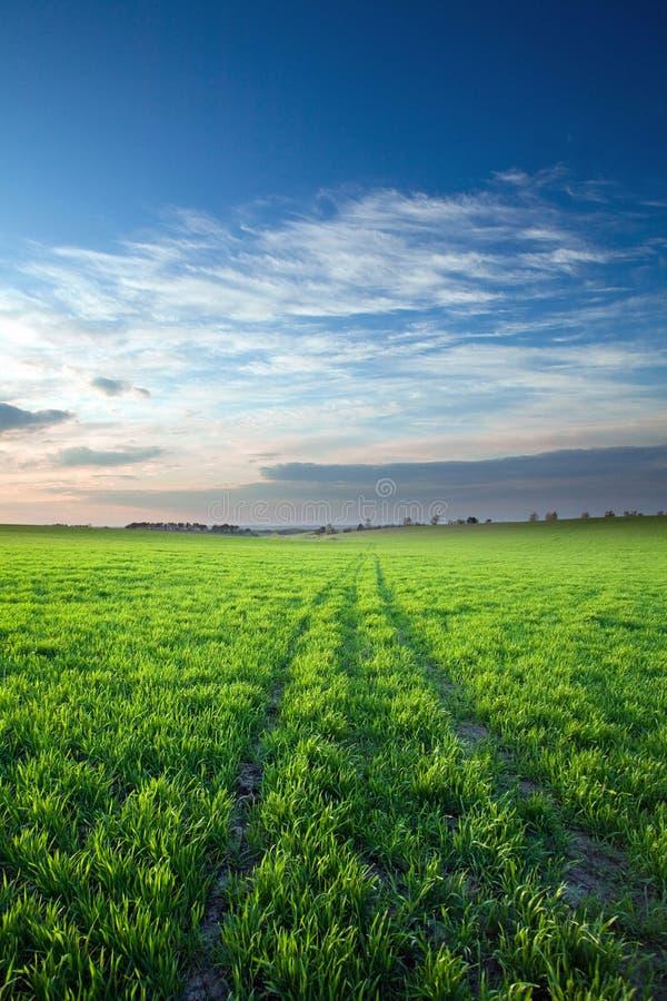 συγκομιδές πράσινες πέρα & στοκ εικόνα