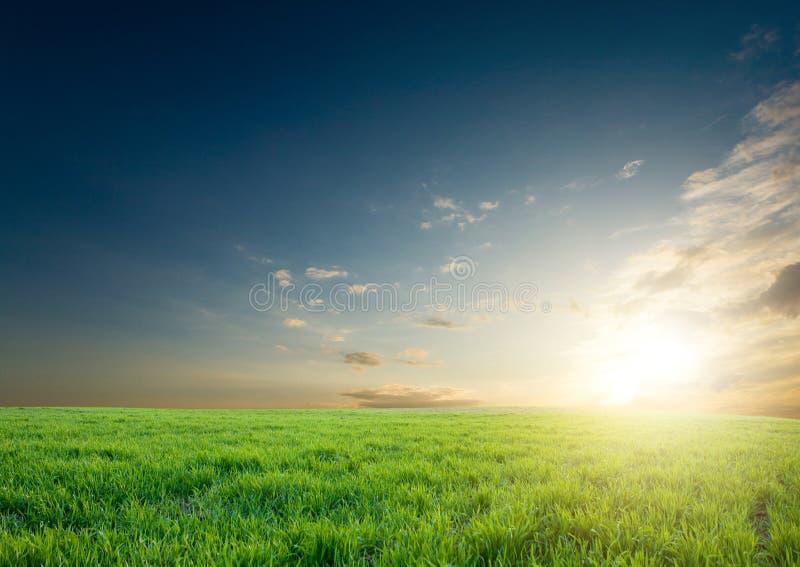 συγκομιδές πράσινες πέρα & στοκ φωτογραφία