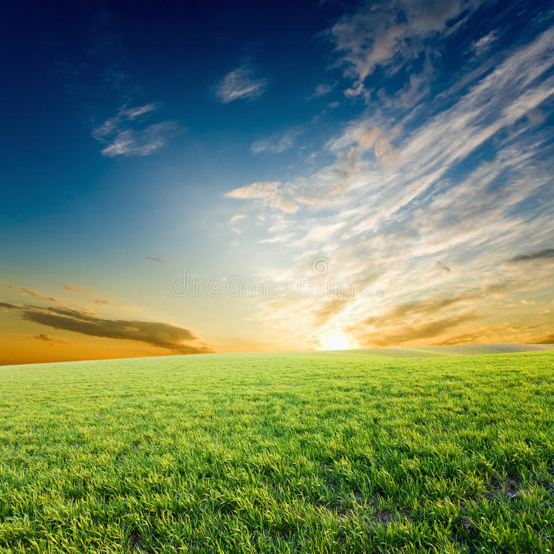 συγκομιδές πράσινες πέρα & στοκ εικόνα με δικαίωμα ελεύθερης χρήσης