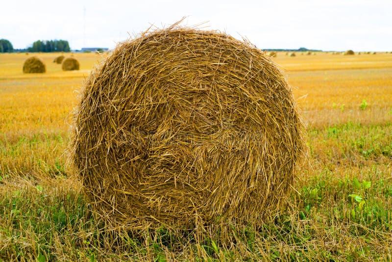 συγκομιδή πεδίων Τομέας γεωργίας με τον ουρανό Αγροτική φύση στη γεωργική γη Άχυρο στο λιβάδι στοκ εικόνες