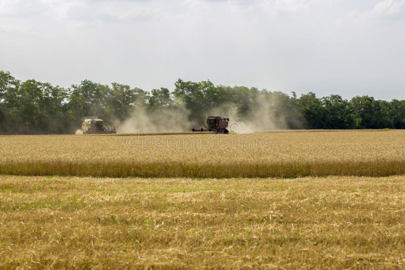 Συγκομιδή του σίτου με τα γεωργικά μηχανήματα στον τομέα στοκ φωτογραφίες
