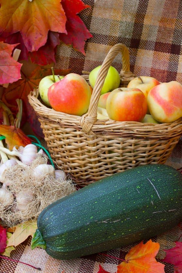 Συγκομιδή φθινοπώρου των λαχανικών στοκ εικόνες με δικαίωμα ελεύθερης χρήσης
