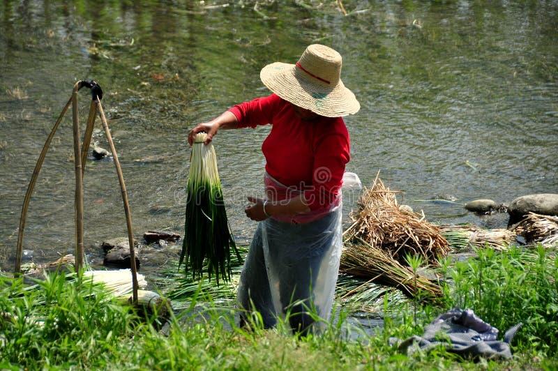 Pengzhou, Κίνα: Πράσινα σκόρδου πλύσης γυναικών στοκ φωτογραφία