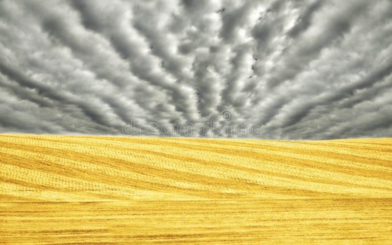 Συγκομισμένοι κίτρινοι τομείς της λοφώδους έκτασης κίτρινοι τομείς στο polsoku και τον ουρανό στις συμμετρικές γραμμές σύννεφων Μ στοκ εικόνες