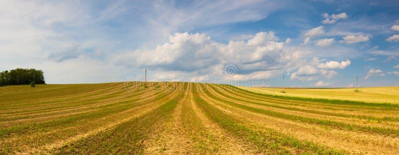 Συγκομισμένος κενός τομέας στους λόφους στοκ φωτογραφία με δικαίωμα ελεύθερης χρήσης