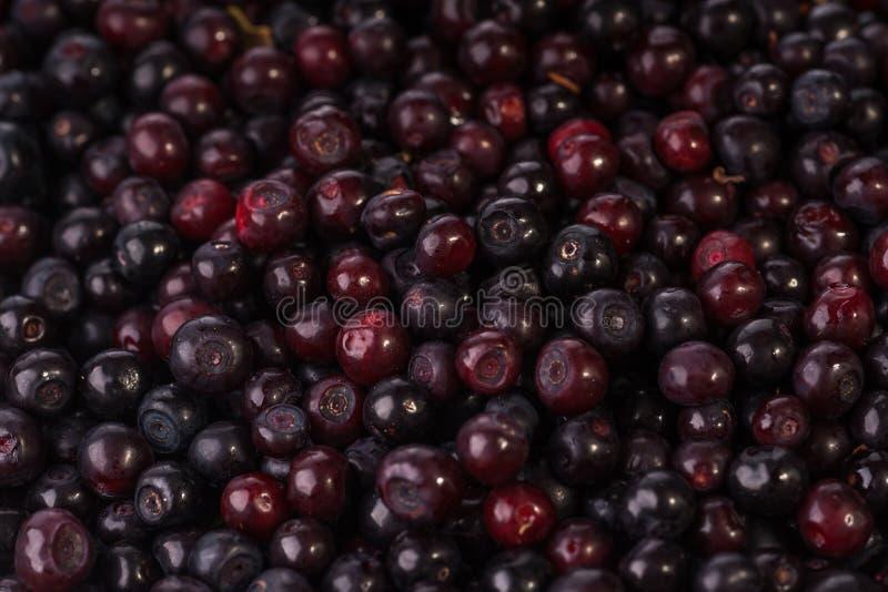 Συγκομισμένο μαύρο Huckleberries στοκ φωτογραφία με δικαίωμα ελεύθερης χρήσης