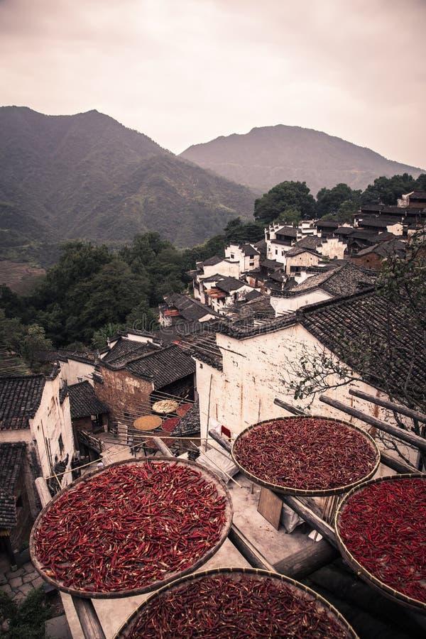 Συγκομιδές ήλιων στις παλαιές κινεζικές στέγες στην αγροτική Κίνα στοκ εικόνες