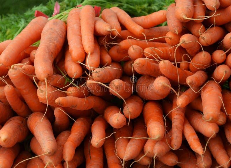 Συγκομιδή καρότων στοκ φωτογραφίες με δικαίωμα ελεύθερης χρήσης