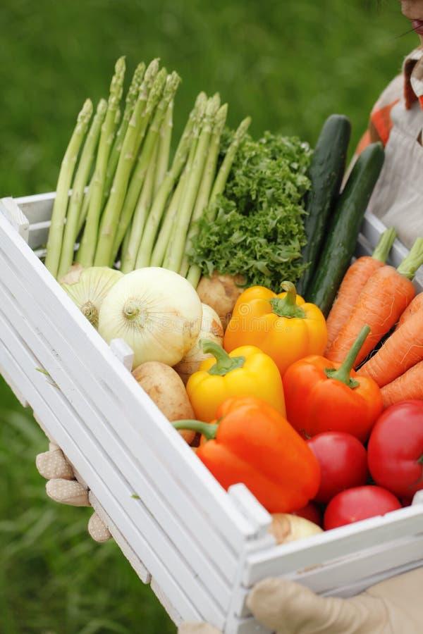 Συγκομιδή των λαχανικών στοκ φωτογραφία