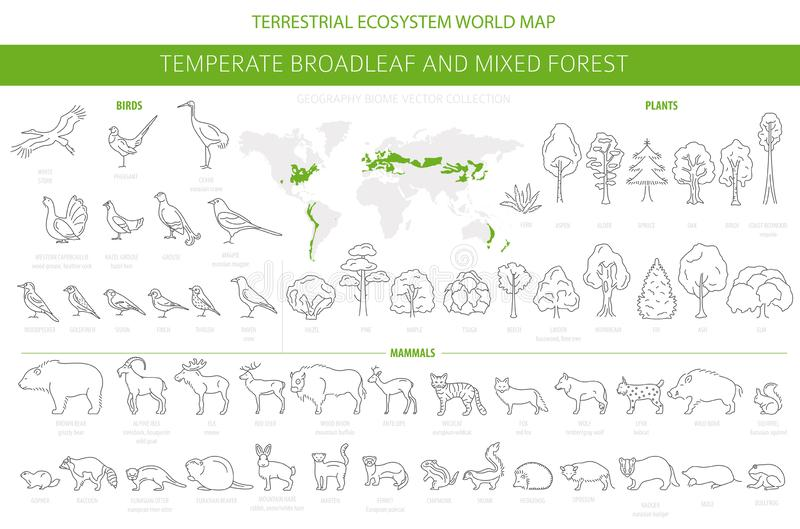 Συγκρατημένο δασικό και μικτό δασικό biome πλατύφυλλων Επίγειος παγκόσμιος χάρτης οικοσυστήματος Ζώα, πουλιά και φυτά καθορισμένα ελεύθερη απεικόνιση δικαιώματος