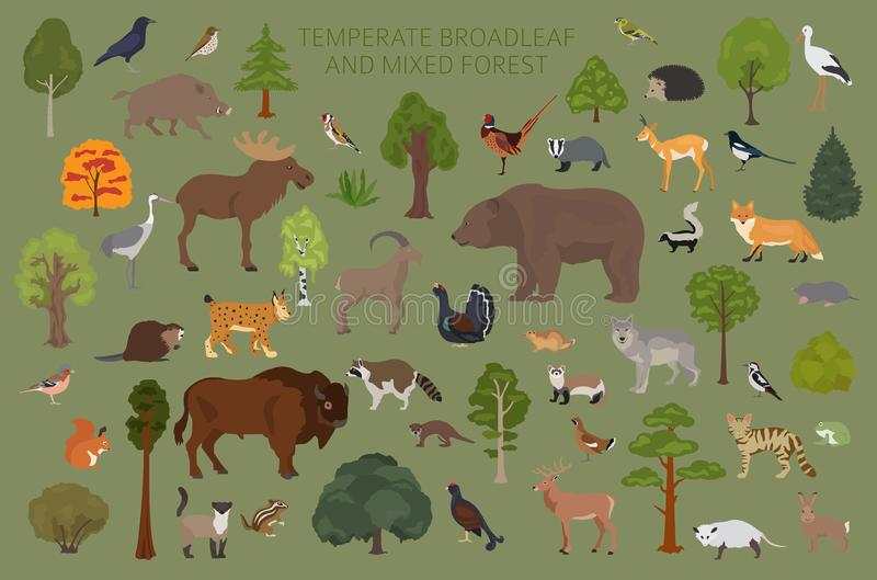 Συγκρατημένο δασικό και μικτό δασικό biome πλατύφυλλων Επίγειος παγκόσμιος χάρτης οικοσυστήματος Γραφικό σχέδιο ζώων, πουλιών και ελεύθερη απεικόνιση δικαιώματος
