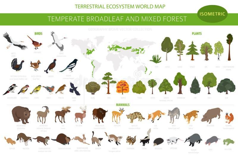 Συγκρατημένο δασικό και μικτό δασικό biome πλατύφυλλων Επίγειος παγκόσμιος χάρτης οικοσυστήματος Ζώα, πουλιά και φυτά καθορισμένα απεικόνιση αποθεμάτων