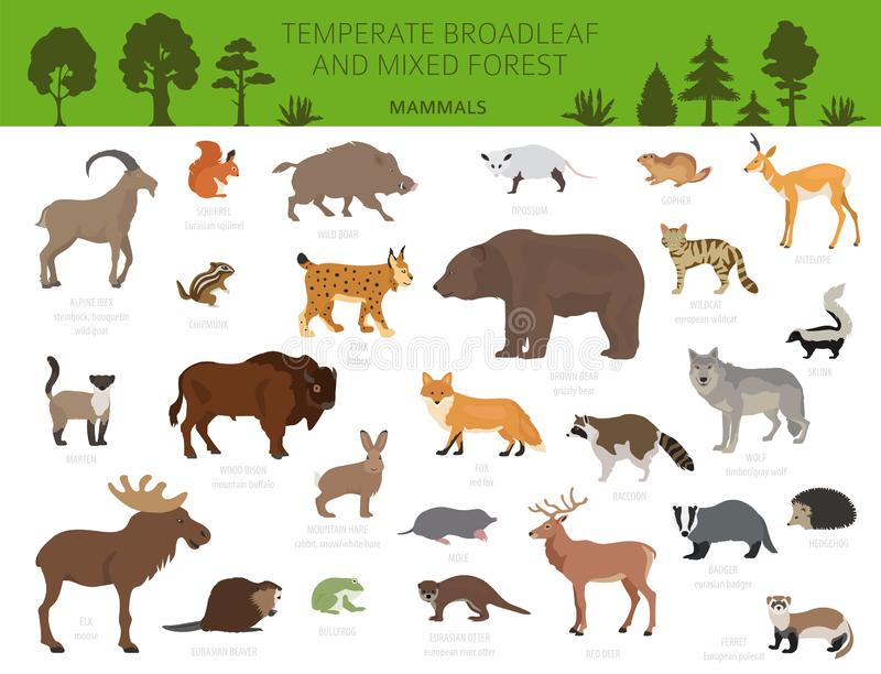 Συγκρατημένο δασικό και μικτό δασικό biome πλατύφυλλων Επίγειος παγκόσμιος χάρτης οικοσυστήματος Γραφικό σχέδιο ζώων, πουλιών και διανυσματική απεικόνιση