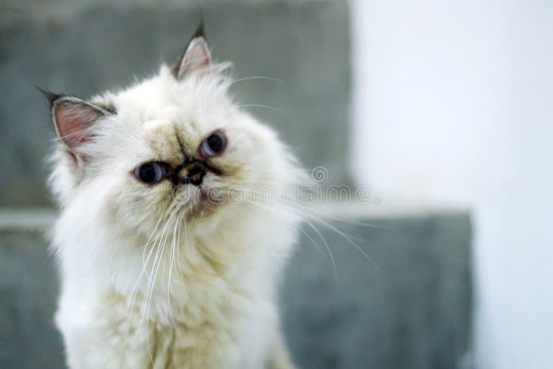 Συγχύσετε τη γάτα στοκ φωτογραφία