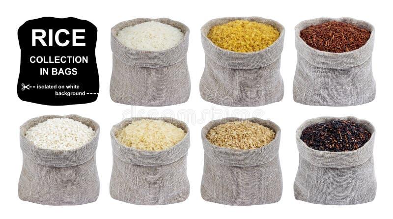 Συλλογή ρυζιού που απομονώνεται στο άσπρο υπόβαθρο Διαφορετικοί τύποι ρυζιών στις τσάντες στοκ εικόνες