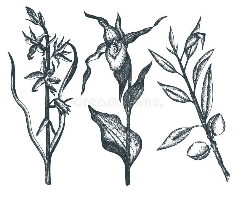 Συλλογή συρμένων των χέρι λουλουδιών και των εγκαταστάσεων στοκ εικόνες