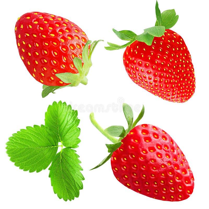 συλλογή της φράουλας που απομονώνεται στο λευκό στοκ φωτογραφία με δικαίωμα ελεύθερης χρήσης