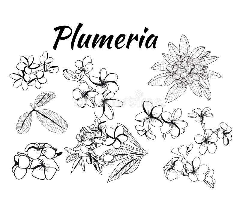 Συλλογή του λουλουδιού plumeria και των φύλλων, απεικόνιση frangipani απεικόνιση αποθεμάτων