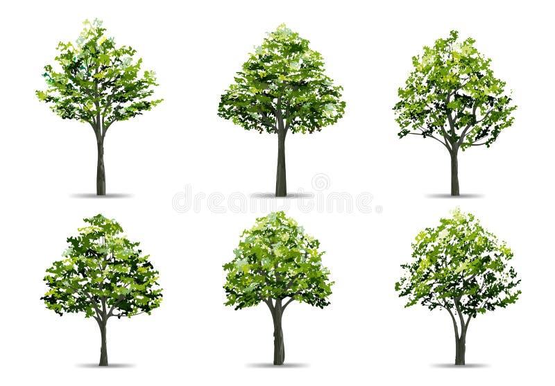 Συλλογή του ρεαλιστικού δέντρου που απομονώνεται στο άσπρο υπόβαθρο Φυσικό αντικείμενο για το σχέδιο τοπίων, το πάρκο και υπαίθρι διανυσματική απεικόνιση