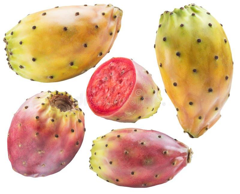 Συλλογή τραχιών αχλαδιών ή opuntia φρούτων στο άσπρο υπόβαθρο Ψαλιδίζοντας μονοπάτι στοκ εικόνα με δικαίωμα ελεύθερης χρήσης