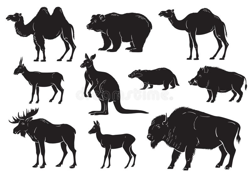 Συλλογή των άγριων ζώων στο άσπρο υπόβαθρο απεικόνιση αποθεμάτων