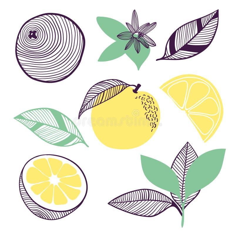 Συλλογή των εσπεριδοειδών Φρούτα, φύλλο και κομμάτι του πορτοκαλιού ή του λεμονιού Διανυσματική συρμένη χέρι απεικόνιση στο σύγχρ απεικόνιση αποθεμάτων