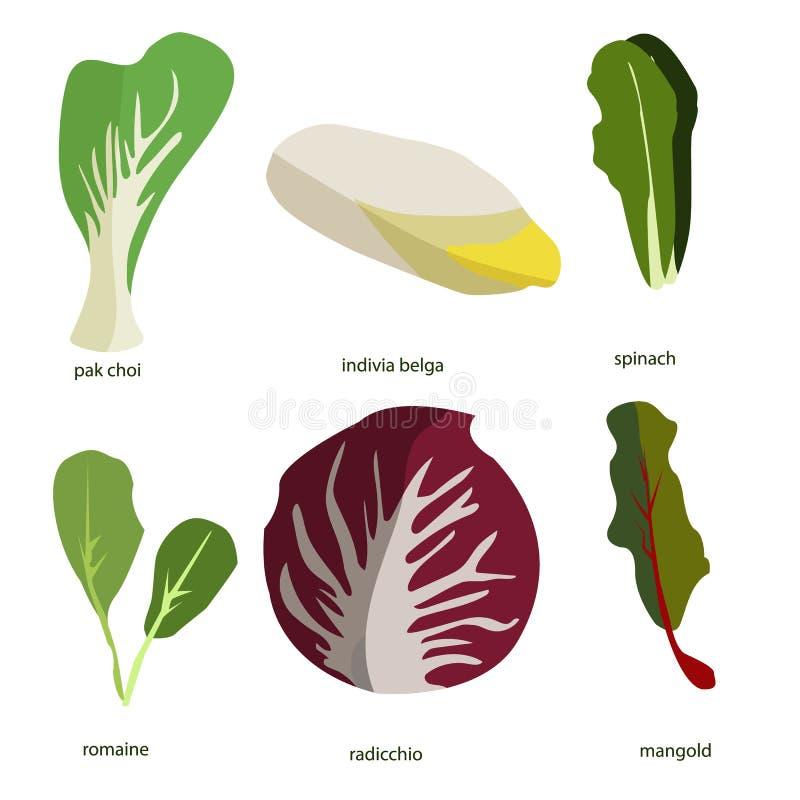 Συλλογή των πράσινων εγκαταστάσεων Δέσμη των νόστιμων λαχανικών και των φύλλων σαλάτας που απομονώνονται στο άσπρο υπόβαθρο Εύγευ ελεύθερη απεικόνιση δικαιώματος