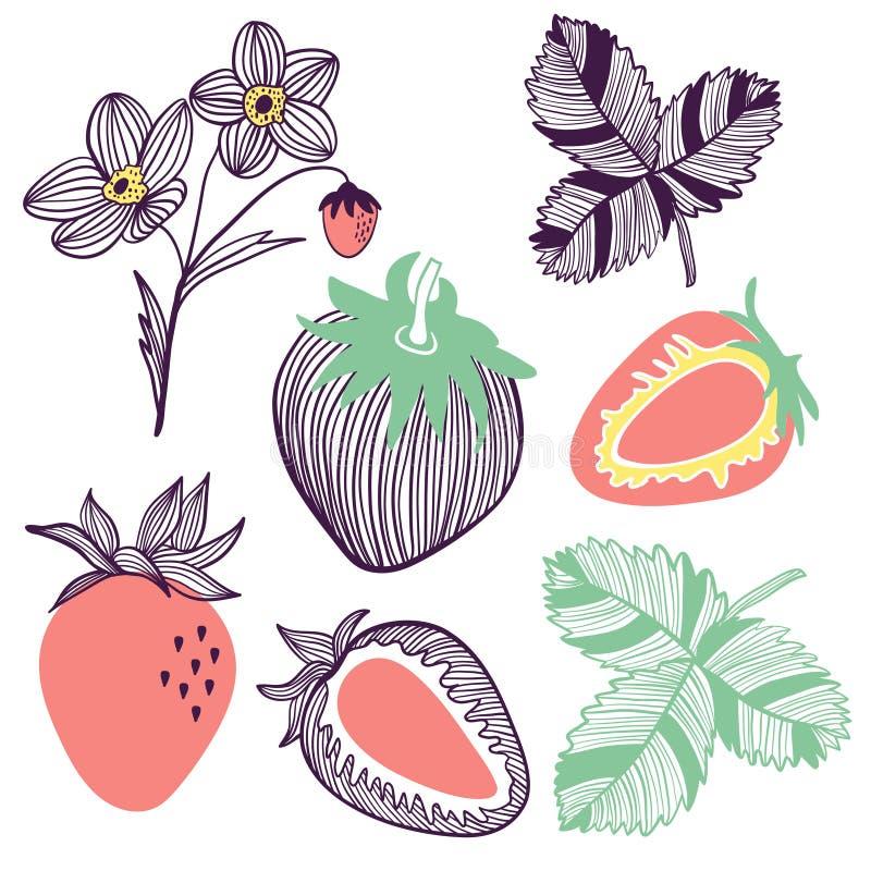 Συλλογή των φραουλών Φρούτα, λουλούδι, φύλλο και κομμάτι της φράουλας Διανυσματική συρμένη χέρι απεικόνιση στο σύγχρονο καθιερώνο απεικόνιση αποθεμάτων