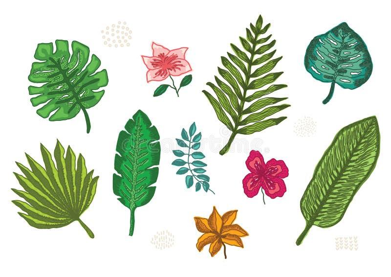Συλλογή των φωτεινών τροπικών φύλλων και των λουλουδιών διανυσματική απεικόνιση