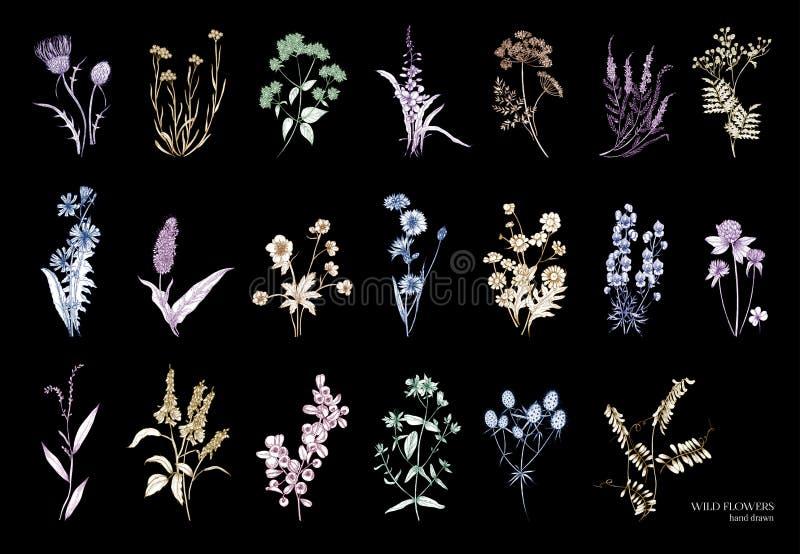 Συλλογή των όμορφων άγριων χορταριών, ποώδη ανθίζοντας φυτά, ανθίζοντας λουλούδια, θάμνοι και subshrubs απομονωμένος επάνω ελεύθερη απεικόνιση δικαιώματος