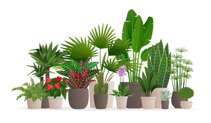 Συλλογή των houseplants για το έμβλημα Ιστού Σε δοχείο εγκαταστάσεις σε ένα απομονωμένο υπόβαθρο διανυσματική απεικόνιση