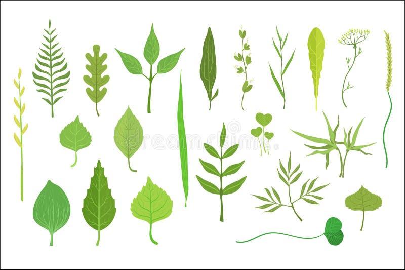 Συλλογή φύλλων δέντρων και φυτών απεικόνιση αποθεμάτων