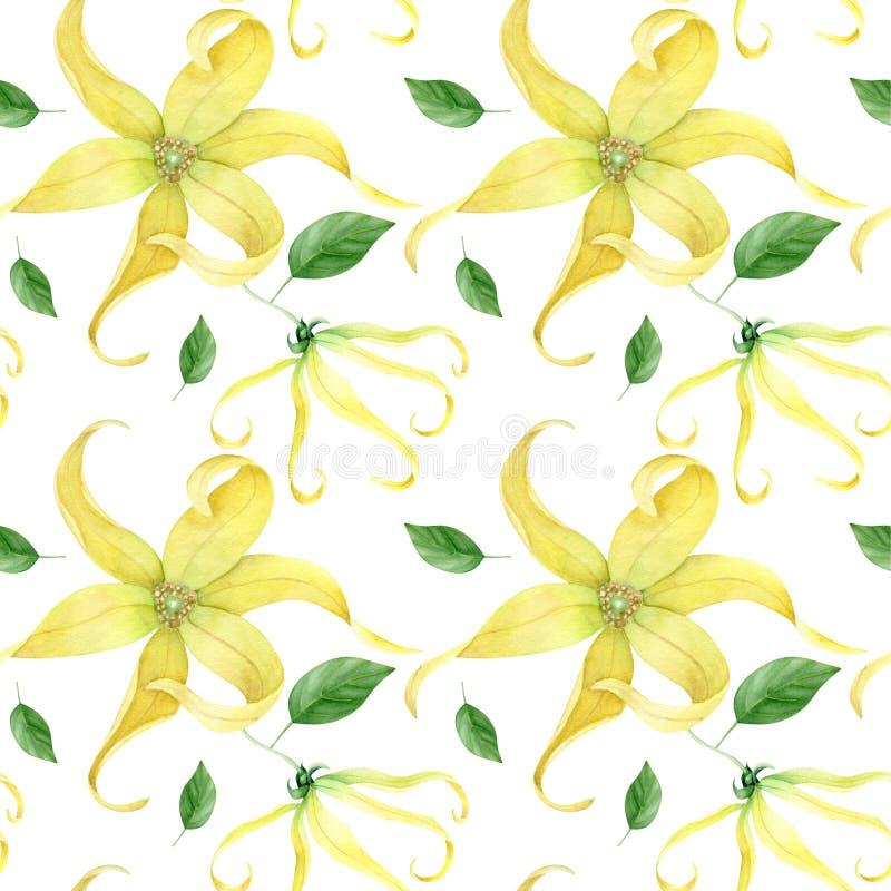 Συλλογή Watercolor ylang ylang διανυσματική απεικόνιση