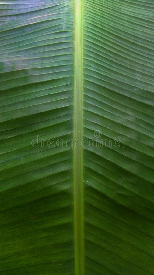 Συμμετρία μπανανών φύσης φύλλων πρασινάδων στοκ φωτογραφία