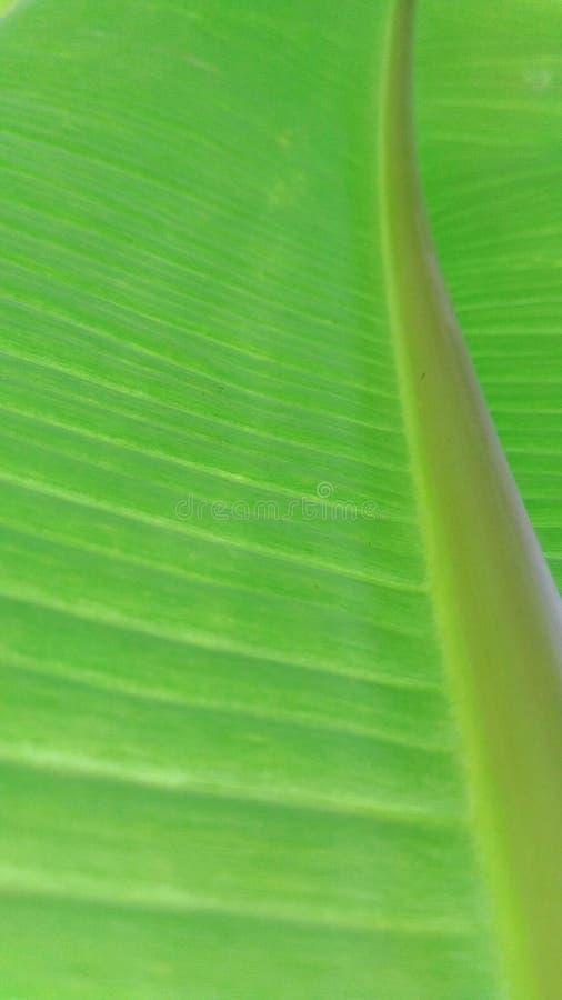 Συμμετρία φύσης πρασινάδων στοκ φωτογραφία