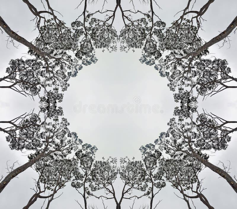 Συμμετρική σκιαγραφία δασικών θόλων στοκ φωτογραφία με δικαίωμα ελεύθερης χρήσης