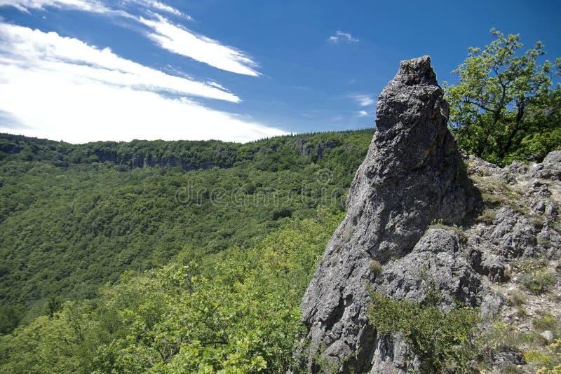 συμπαθητική άποψη επάνω από το πράσινο δάσος στο καλοκαίρι στοκ φωτογραφία με δικαίωμα ελεύθερης χρήσης