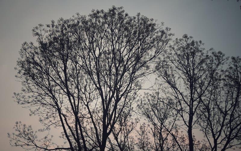 συμπαθητικό δέντρο και κόκκινος ουρανός στο σούρουπο στοκ εικόνες