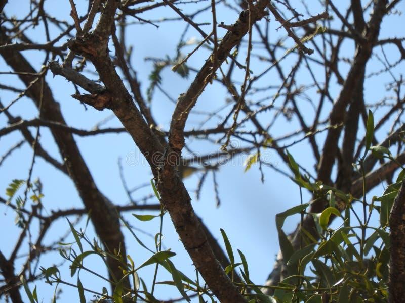 συμπαθητικό δέντρο στοκ εικόνες με δικαίωμα ελεύθερης χρήσης