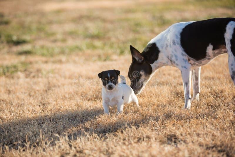 Συνάντηση με σκύλους και κουτάβια στοκ εικόνες