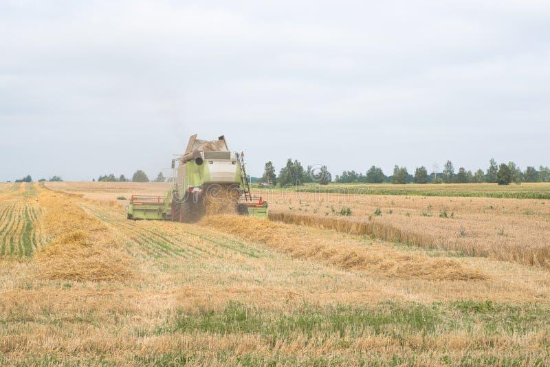 Συνδυάστε συγκομίζει έναν τομέα σίτου το φθινόπωρο στοκ εικόνες με δικαίωμα ελεύθερης χρήσης