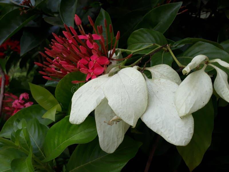 Συνδυασμός λουλουδιών στοκ εικόνα