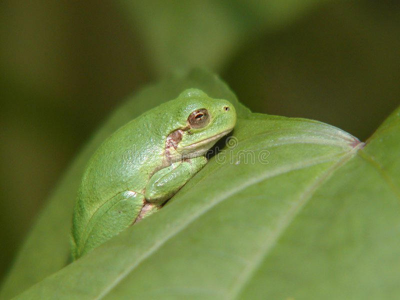 Download συνδυασμός στοκ εικόνα. εικόνα από κήπος, πράσινος, βάτραχος - 82107