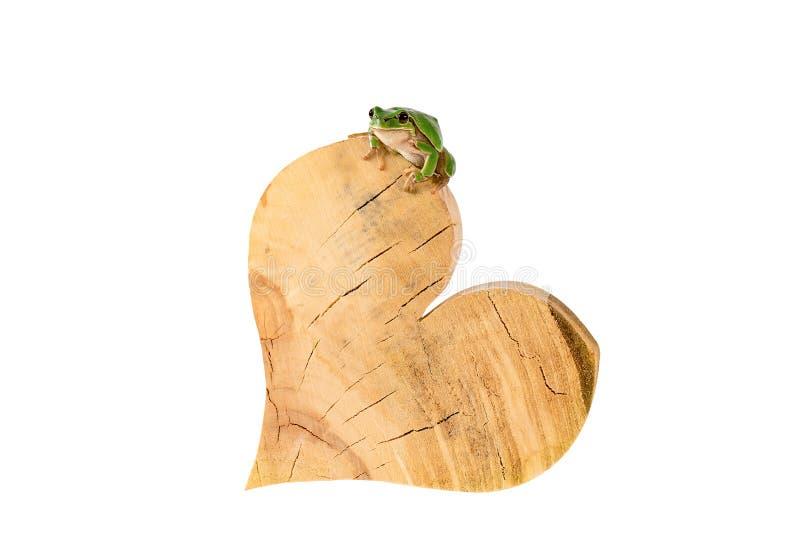 Συνεδρίαση βατράχων δέντρων στην ξύλινη καρδιά που απομονώνεται στην άσπρη πορεία ψαλιδίσματος συμπεριλαμβανόμενη στοκ εικόνες με δικαίωμα ελεύθερης χρήσης