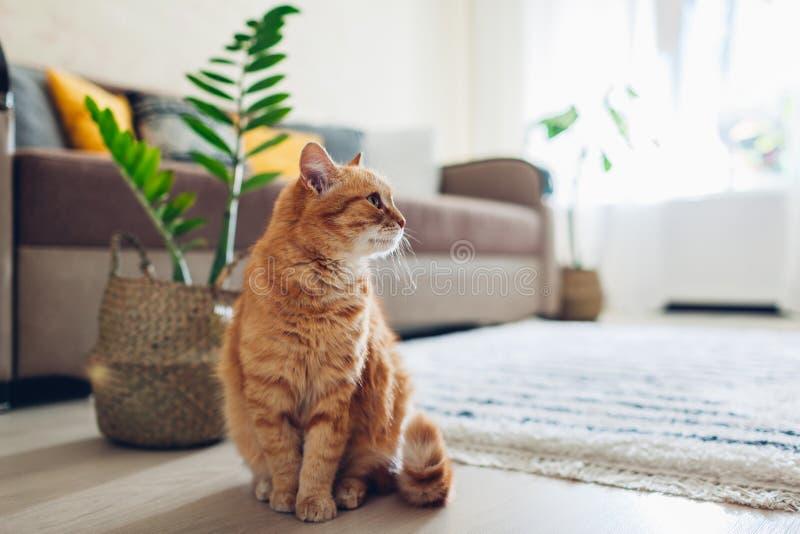Συνεδρίαση γατών πιπεροριζών στο πάτωμα στο άνετο καθιστικό E στοκ εικόνα με δικαίωμα ελεύθερης χρήσης