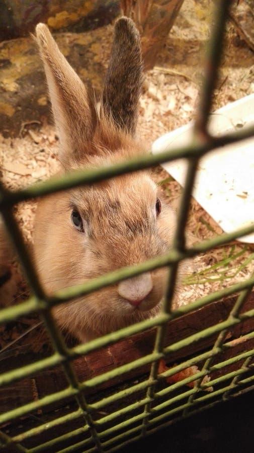 Συνεδρίαση κουνελιών σε ένα κλουβί καια και πεινασμένα μάτια βλεμμάτων στοκ εικόνες με δικαίωμα ελεύθερης χρήσης