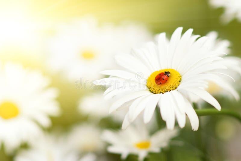 συνεδρίαση λουλουδιώ&n στοκ φωτογραφίες