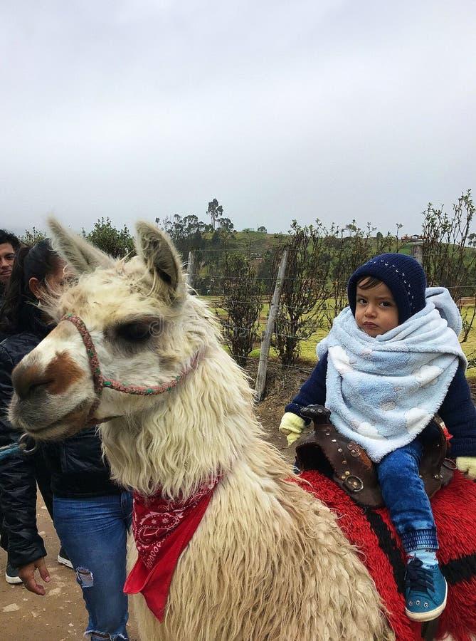 Συνεδρίαση μικρών παιδιών σε μια προβατοκάμηλο στις καταστροφές Ingapirca, Ισημερινός στοκ εικόνες